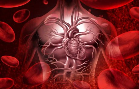 The Importance of blood vessels elasticity and blood pressure