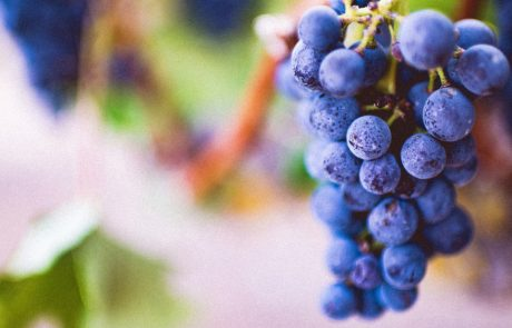 The Secret between Grapes and Good Health